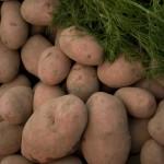 картошка деше 2