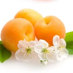 абрикос лысый